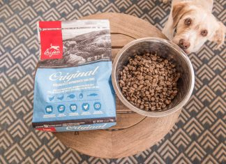 Working as a Dog Food Tester