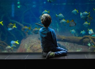 fish tank cleaning business